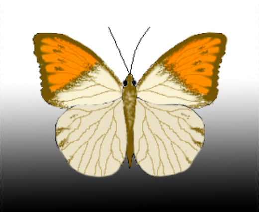butterfly in  Photoshop